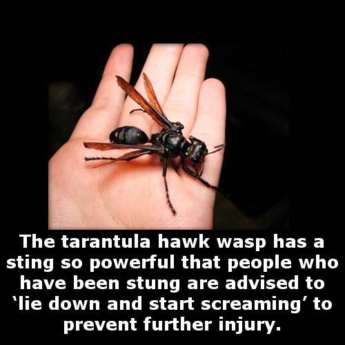 I would not want to be stung by that