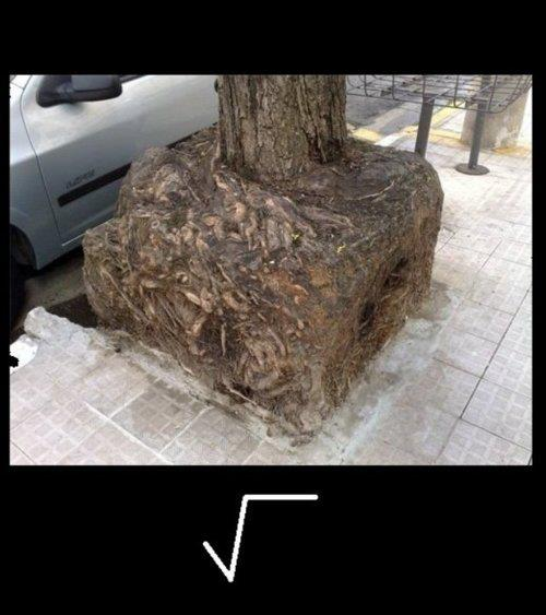 Origin of the square root symbol