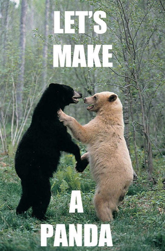 So This Is How Pandas Are Made