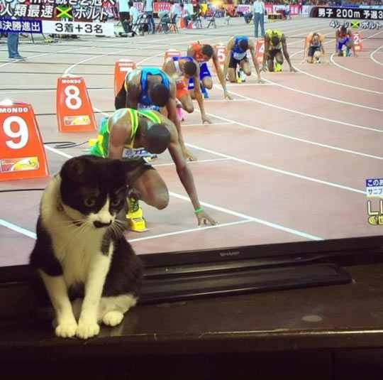 Ready, Set, Cat!
