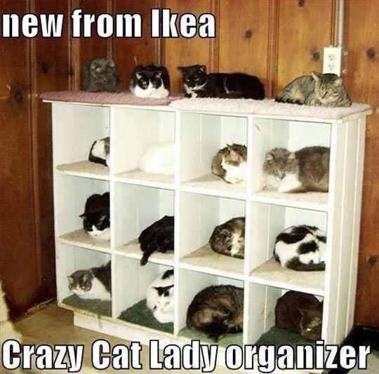Cat Ladies Rejoice
