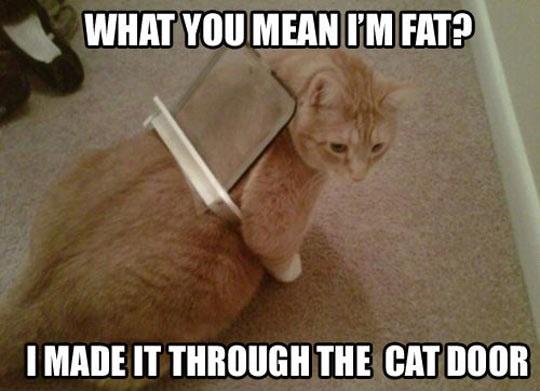 Stop Calling Me Fat