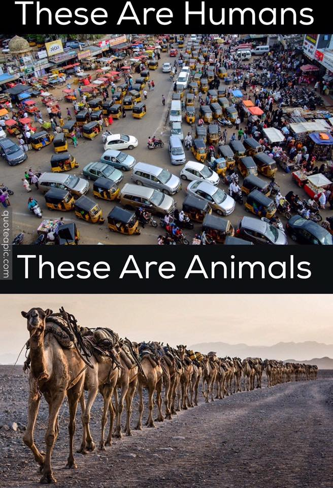 Don't be like humans, be like animals... 'Think'