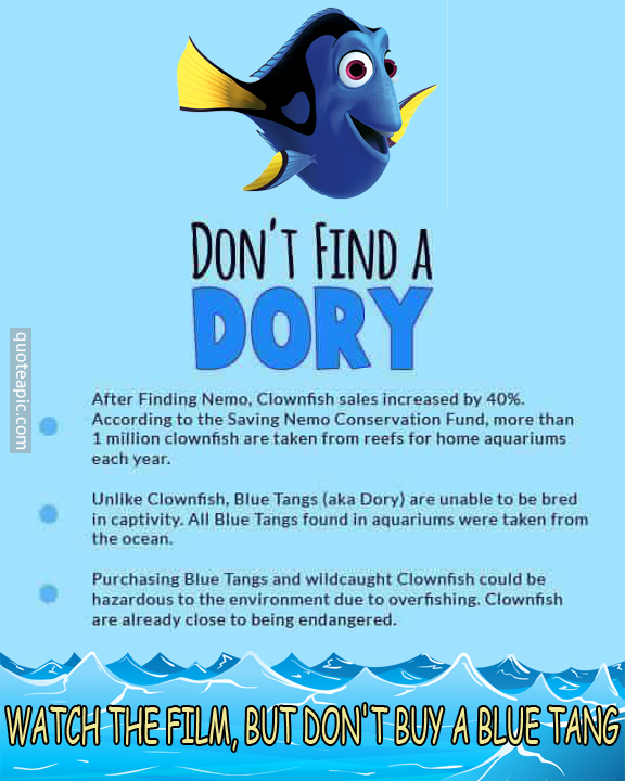Don't Find A Dory