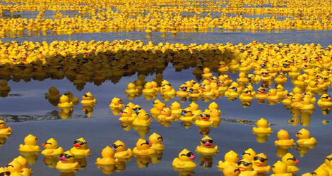 Thousands Of Rubber Ducks To Land On Shores After 15 Year Journey