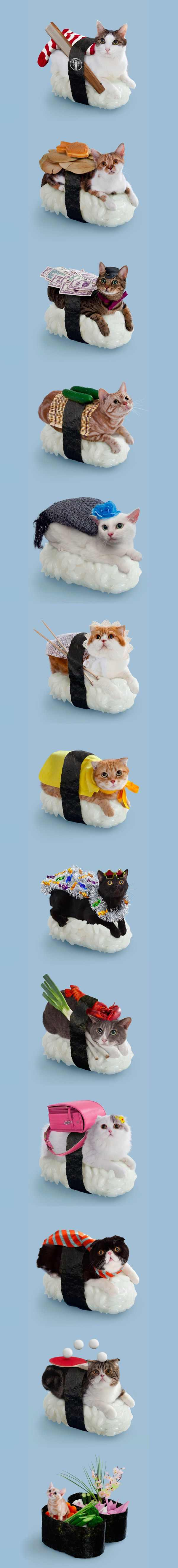 Sushi Cats: Adorable Collection Of Magical Felines Resting On Sushi Rice
