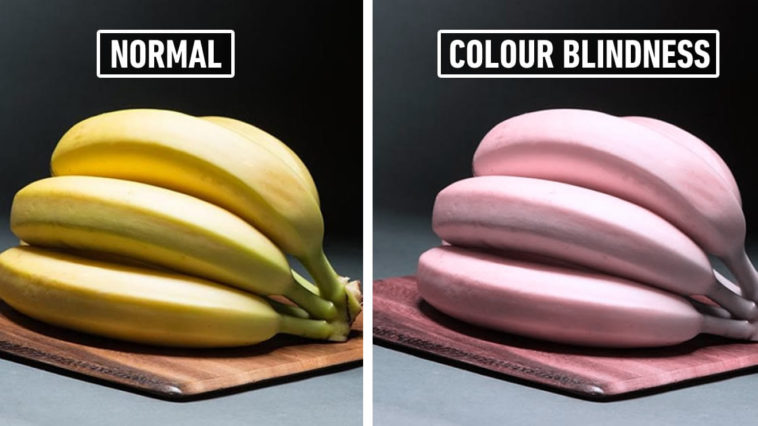 This Is How People With Different Types Of Colour Blindness See The World We Live In